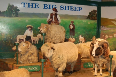 Sheep show Big Sheep in Devon