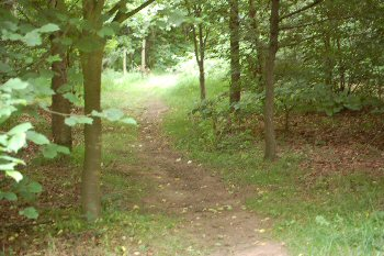 Coundon Wedge, Coventry - Path through trees